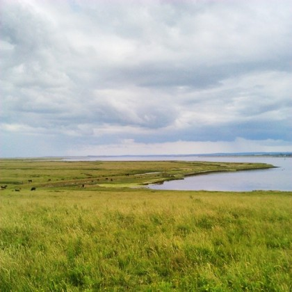 Elmley, looking East and home