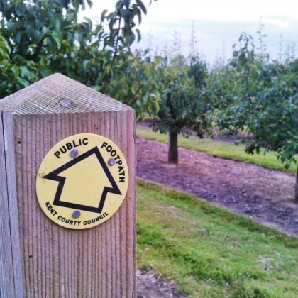 Through the orchards