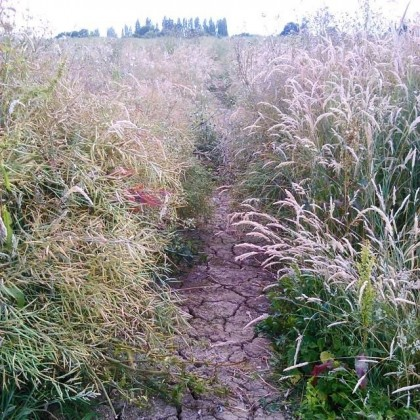 Into another overgrown footpath across a field