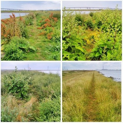 The Saxon Shore Way's various levels of growth